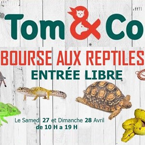 Tom & Co organise une bourse aux reptiles !